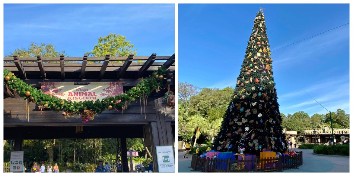 Disney's Animal Kingdom decorated for the Holidays