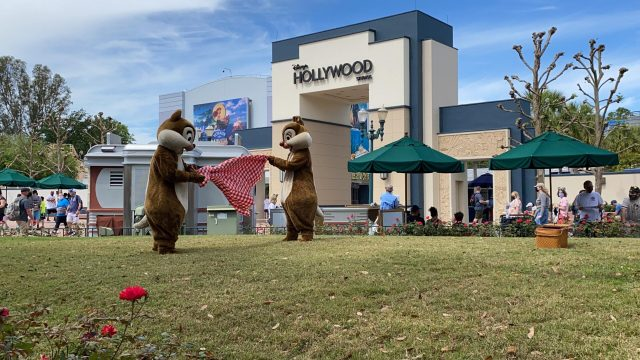 Have a picnic with Chip and Dale in Hollywood Studios 5