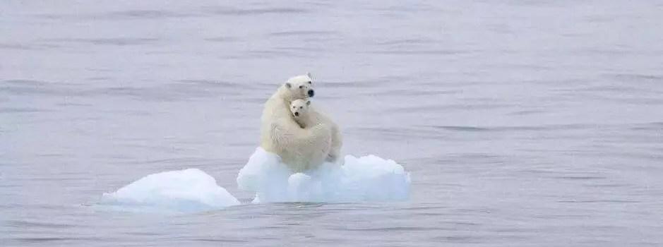 Week 17-親愛的北極熊