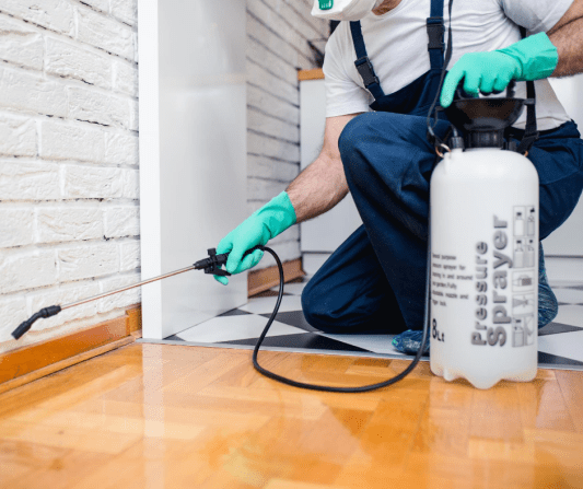 What Are The Best Pest Control Methods: Pest Control Tips
