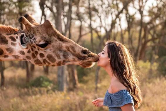 Giraffe Manor Nairobi Kenya Giraffe Interactions Romantic Date Ideas in Jacksonville