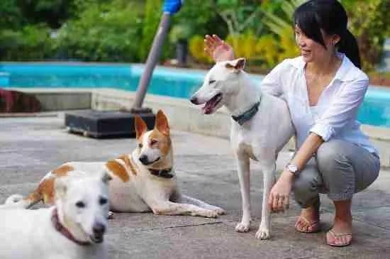 casa susegad Keep Your Pets Safe