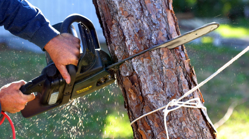 r3e How Much Does Tree Removal Typically Cost?