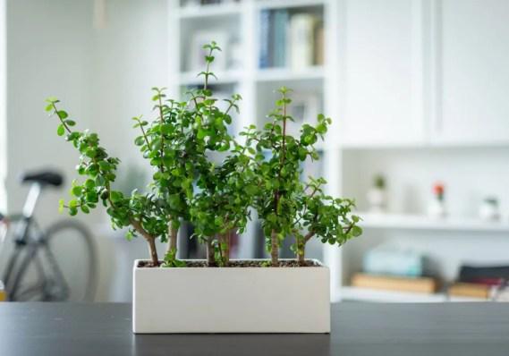 Benefits of Adding Indoor Plants