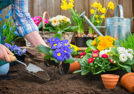 Must-Have Gardening Tips for Beginners
