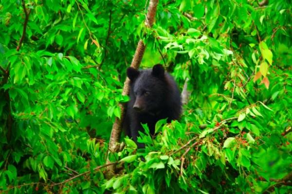 熊への対策にライトは有効?登山におすすめな懐中電灯10選