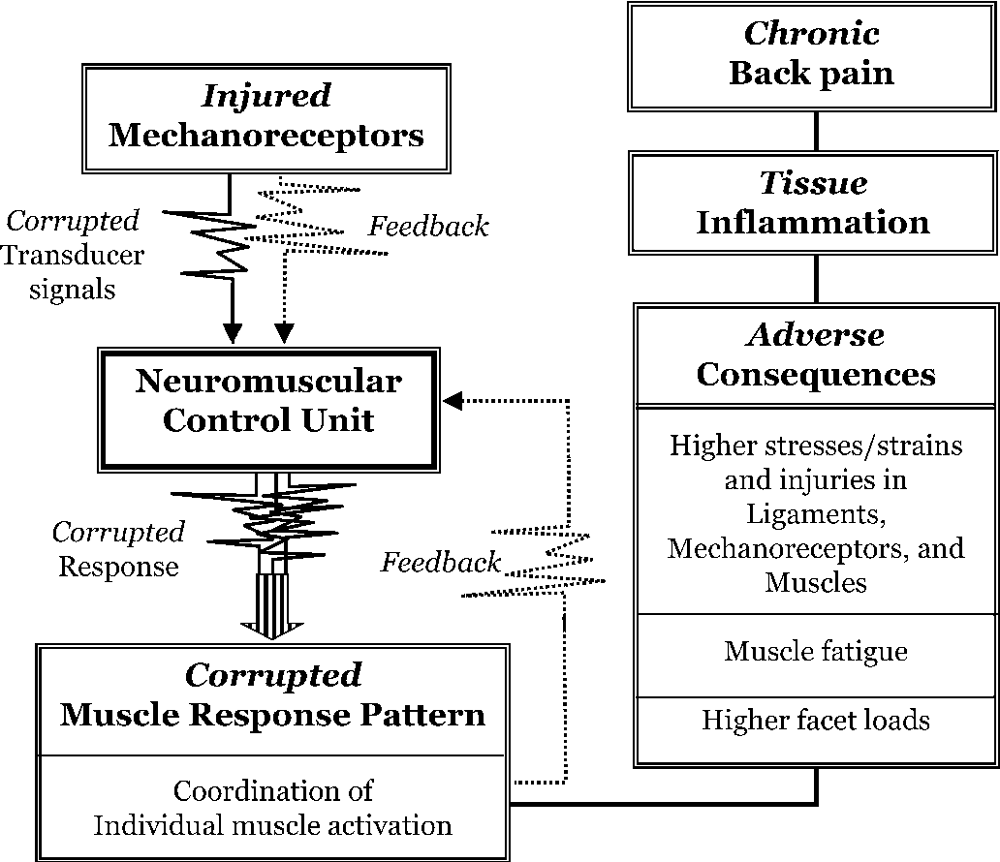 A Hypothesis of Chronic Back Pain