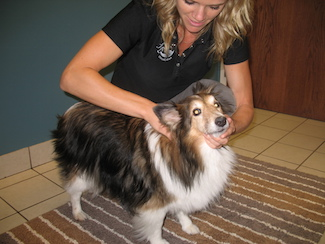 dog_neck_pain_pet_chiropractor_treatment