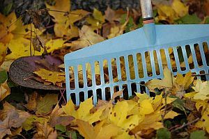 rake-in-leaves-200-300