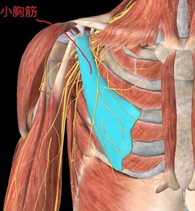 小胸筋の緊張で腕に痺れや痛みが起きる