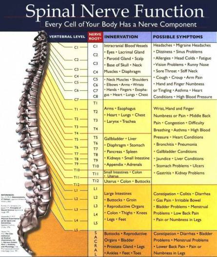 Chiropractor in Miami Lakes 33014