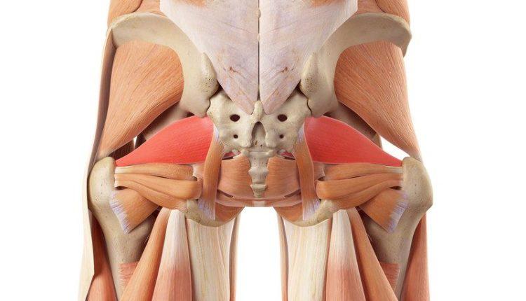 piriformis muscle anatomy