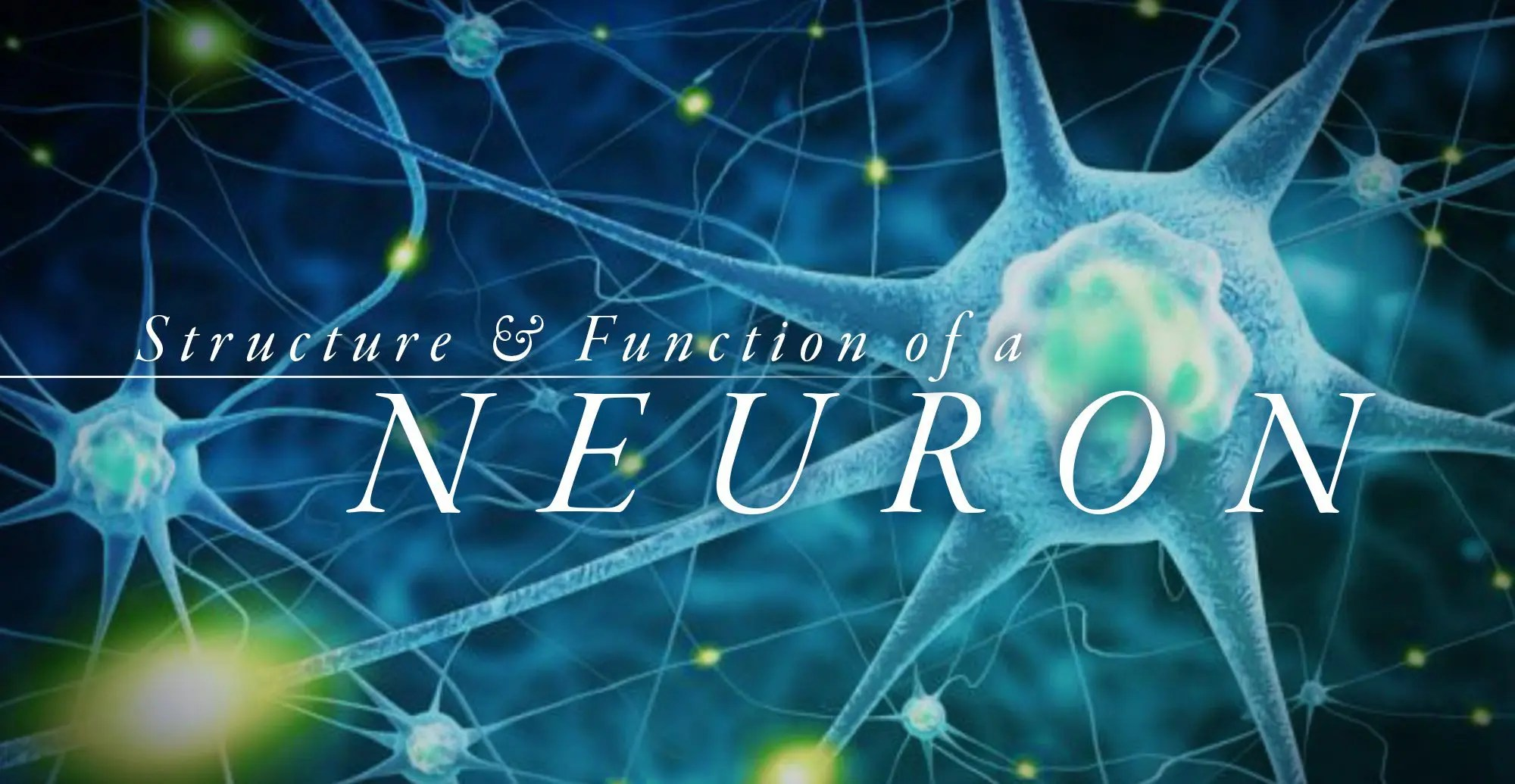 Understanding the Structure and Function of a Neuron