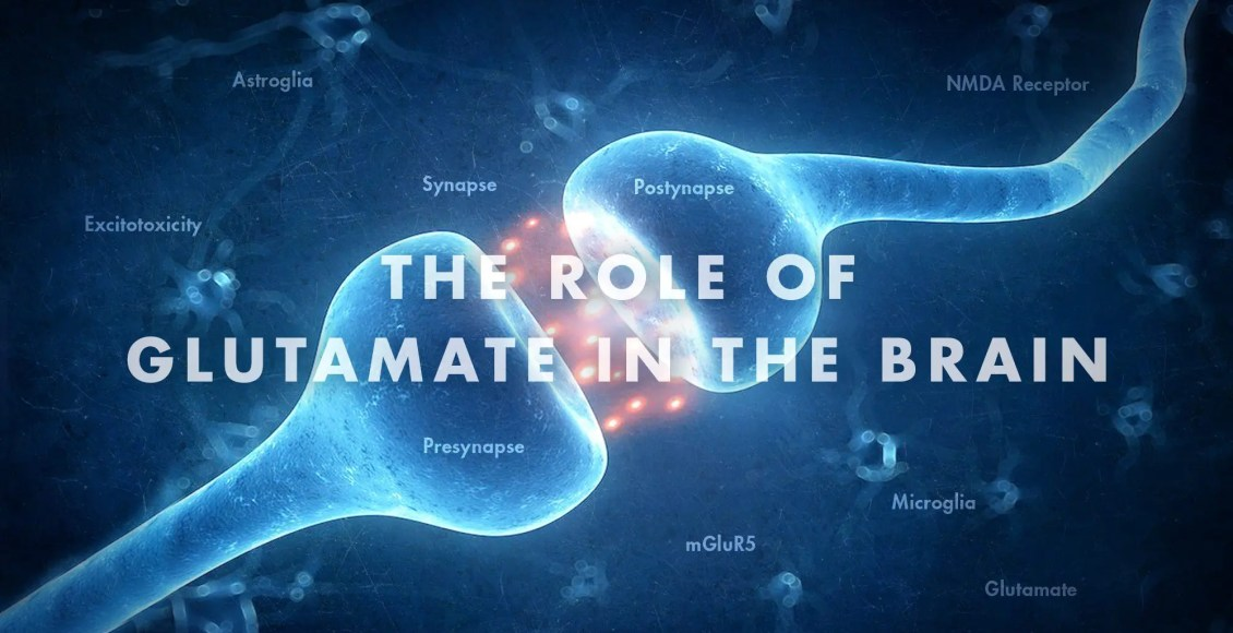Functional Neurology: The Role of Glutamate in the Brain | El Paso, TX Chiropractor