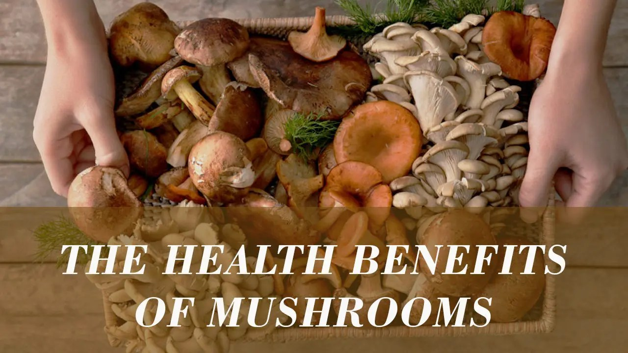 The Top 8 Mushrooms for Immune Health