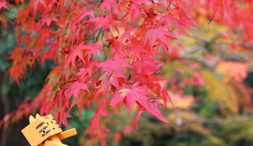【紅葉最新情報】関西ウォーカーで絶景紅葉ライトアップ第1位に選ばれた神護寺の紅葉♡①