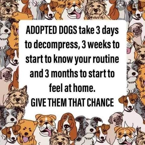 07-AdoptedDogs