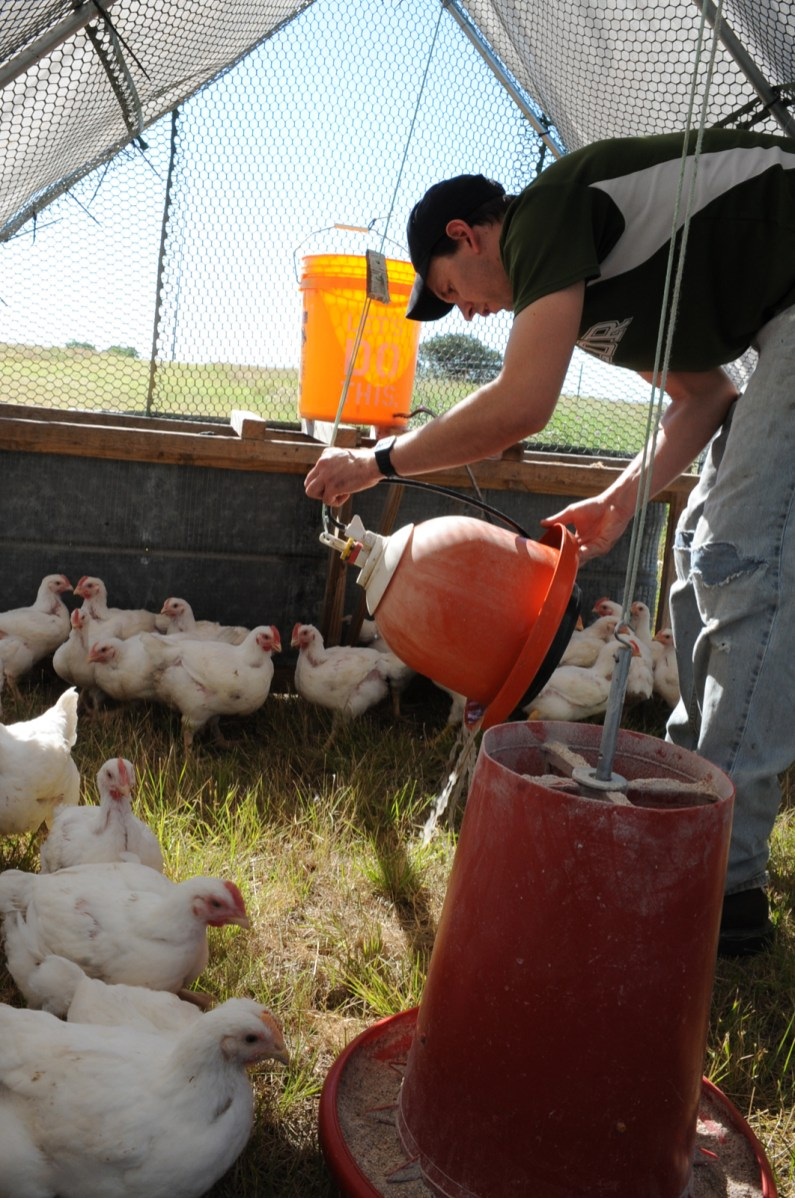 John Stanley flushes out a watering jug for his pasture chickens.