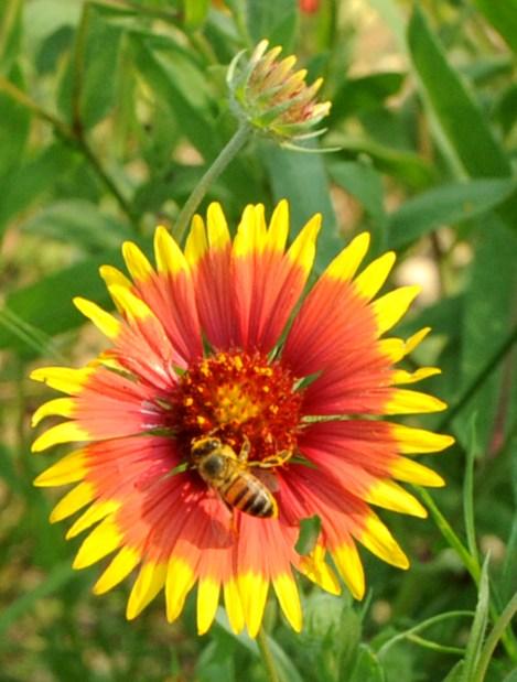 bee_flower_web