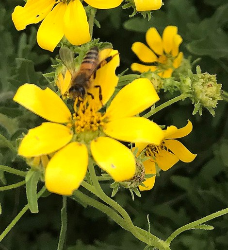 Pollinators such as bees are of vital importance to agriculture and for maintaining ecosystem health.