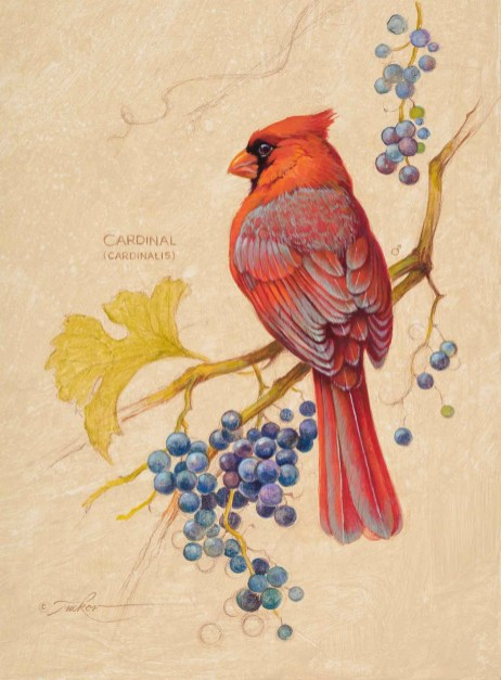 Cardinal #2 by Ezra Tucker is one of the selected art works in the Oil/Acrylic division for the 2020 Bosque Arts Center Art Classic.
