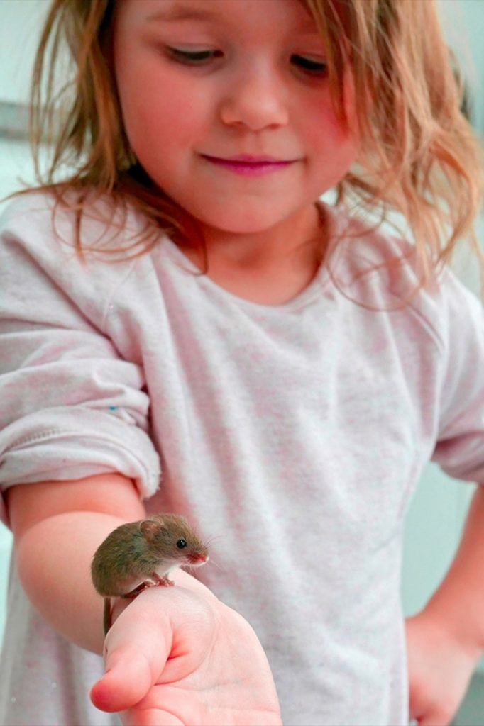Andy Sands Wildlife photographer Skyla with Harvest Mouse