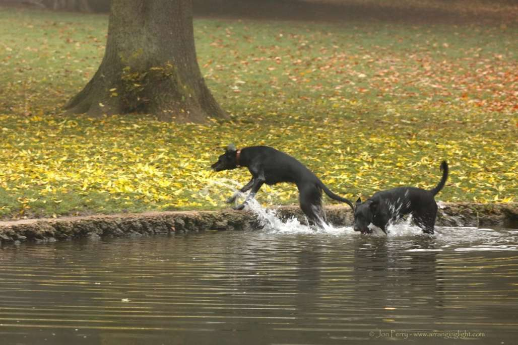 Chiswick Calendar Photographers Jon Perry Autumn Splash