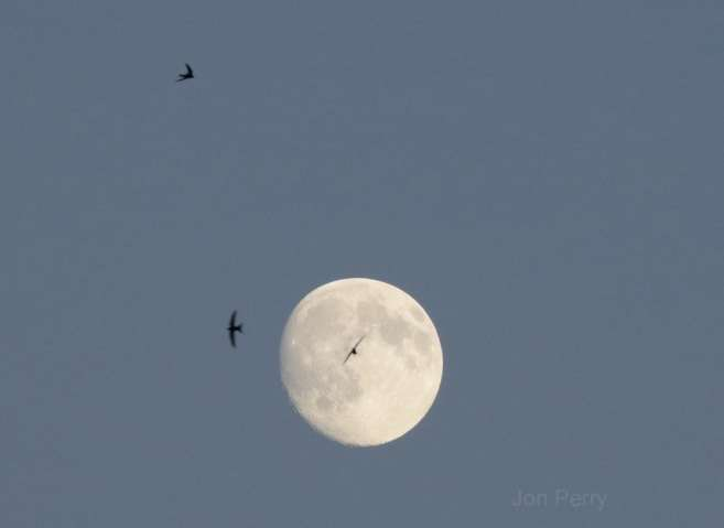 Swift Moonflight II Jon Perry