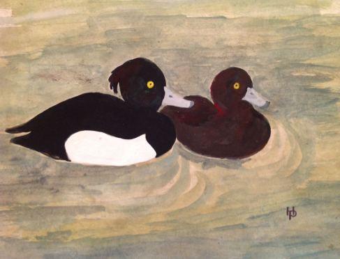 2015 Artists at Home Henrietta Parsons 3, Tufted Ducks