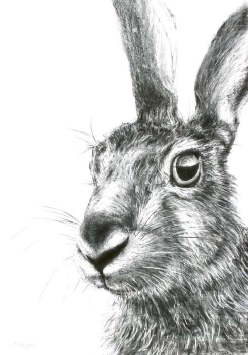 2015 Artists at Home Jill Meager 3, Hare