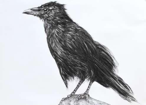 2015 Artists at Home Jill Meager 4, Crow fledgling
