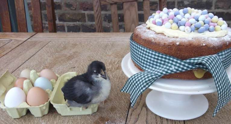 Chick with Cake