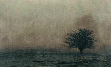 Misty Tree in Norfolk by Anna Kunst
