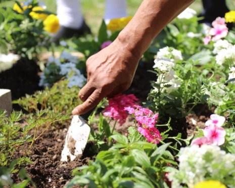 planting flowers chiswick abundance london