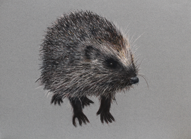 'Hedgehog' by Jill Meager