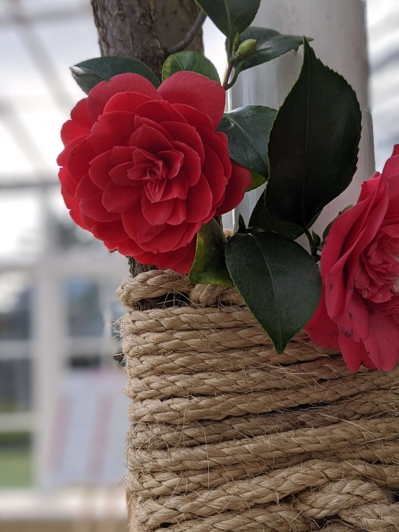 Chiswick House Camellia Show 7