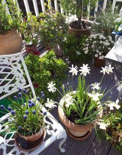 Garden 1 Outer Space Instagram
