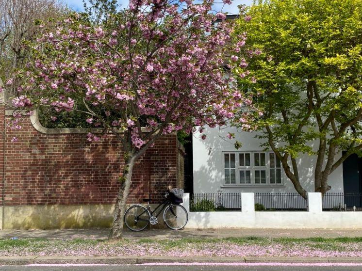 Jennifer Griffiths cherry blossom 3