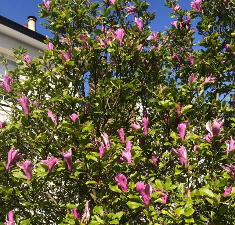blossom 1_web