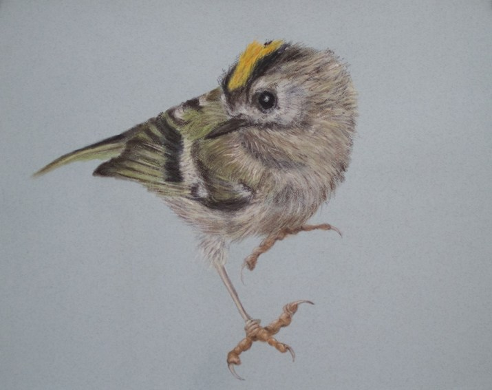 'Goldcrest' by Jill Meager