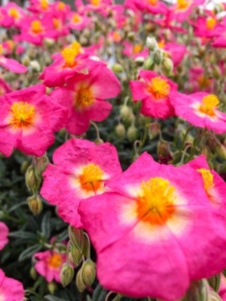 Mark Lawson flowers 1