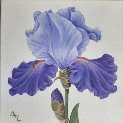 Annie Leach - Iris sq