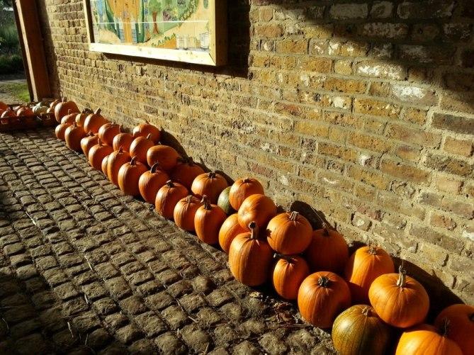Abundance-London-community-project-Chiswick-pumpkins