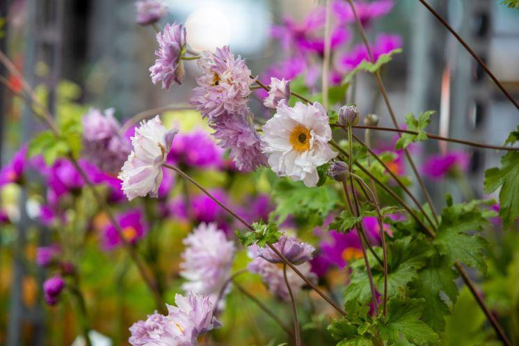 FlowerMkt-0696 (1)_web