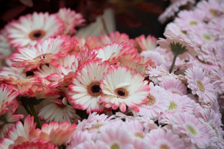 FlowerMkt-0701