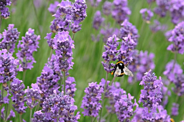 Abundance London planting - Barbara Chandler 2_web