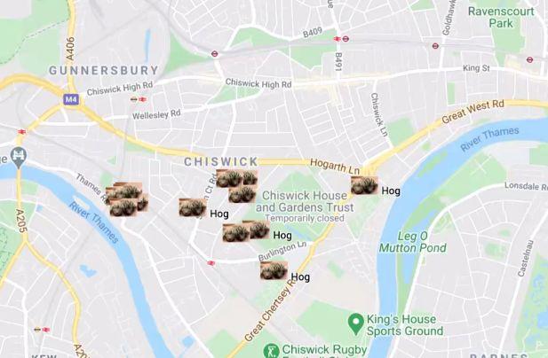 hedgehog chiswick map