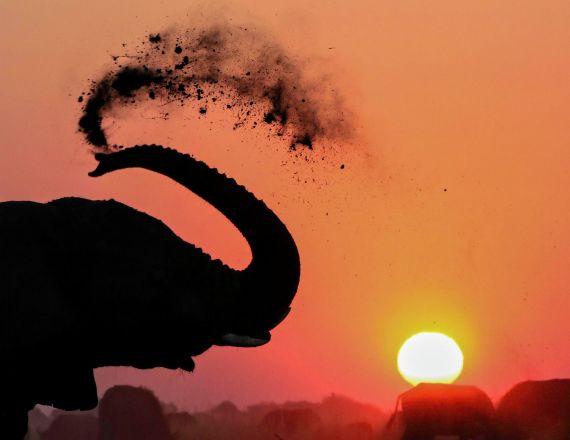 A18 - Elephant Sunset - Animals