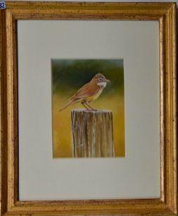 Chrissy Wilson, Bird - UID82