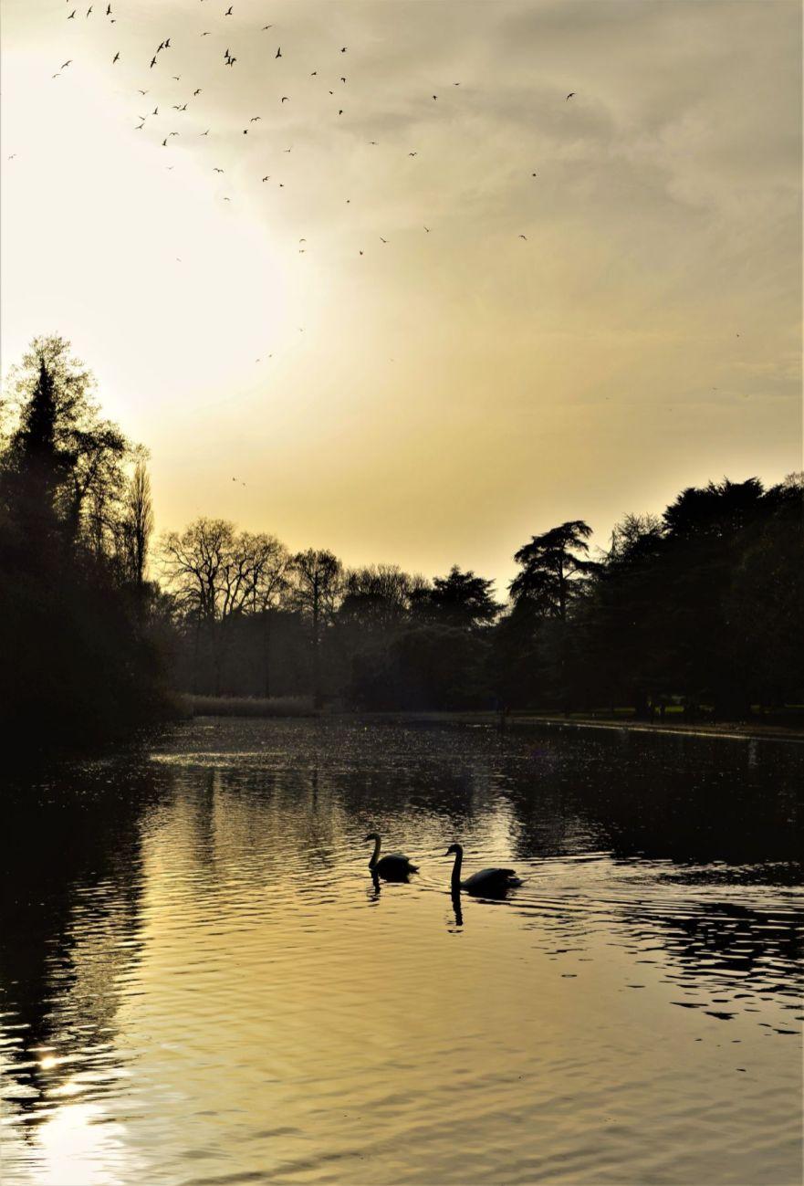 LS07 - Osterley Evening - Landscapes & Seascapes